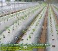 công ty màng phủ nông nghiệp hà nội.jpg