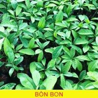 Bon-Bon1.jpg