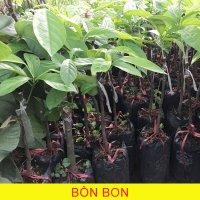 Bon-Bon2.jpg